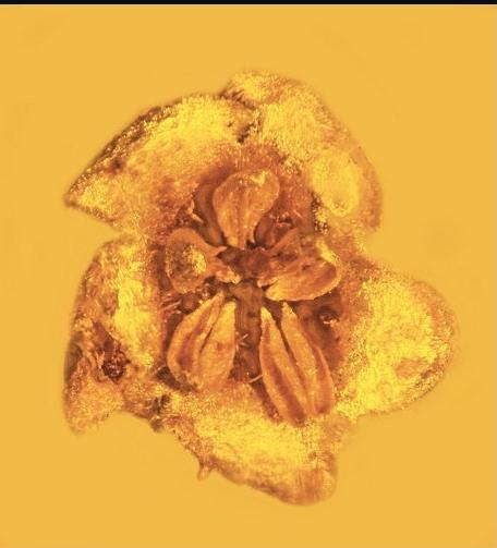 prehistoric-flower.jpg